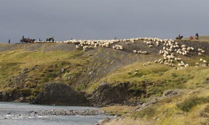 """Seid dabei, wenn es Anfang September heißt, die Schafe vom Hochland """"abzuholen""""!"""