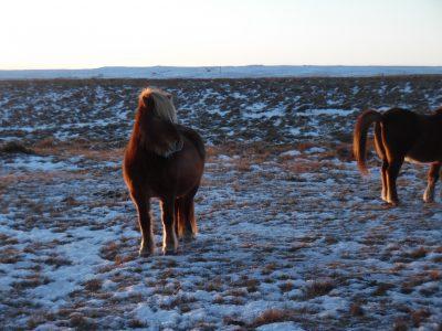Zu Besuch bei den Pferden