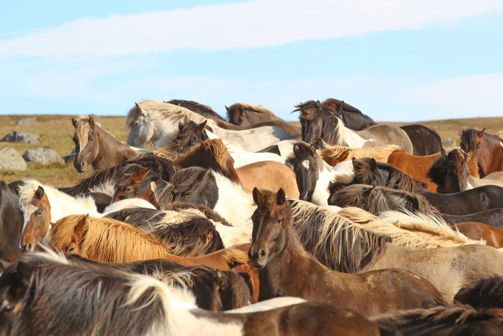 Die Herde sammelt sich