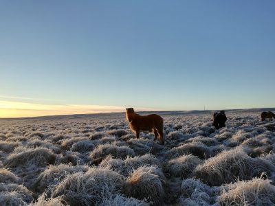 schaut alles aus wie ein Winterwunderland!
