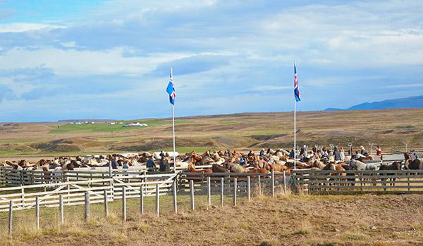 Miðfjarðarrétt